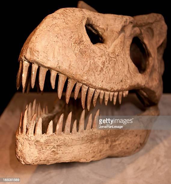 t-rex skull bones