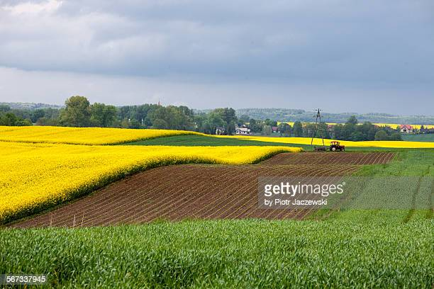 Tri colors fields