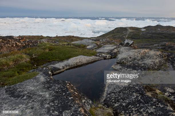 Triangular puddle on Sermermiut an old Inuit settlement and now a popular trekking site for tourists visiting Ilulissat town and the ice fjord In the...