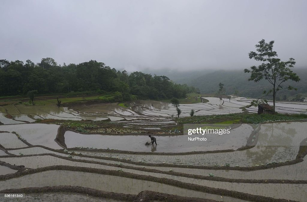 A tribal Naga farmer works at a water bedded rice paddy field for plantation at Shajouba Village in the Senapati district of India north eastern state of Manipur on Tuesday, May 31, 2016. Over 70 percent of Indians depend on farm incomes and about 65 percent of the country's farms depend on monsoon rains that fall between June and September.