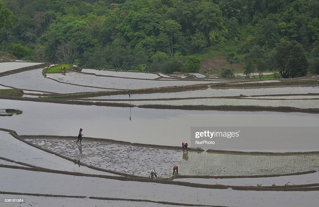 Tribal Naga farmers work at a water bedded rice paddy field for plantation at Shajouba Village in the Senapati district of India north eastern state of Manipur on Tuesday, May 31, 2016. Over 70 percent of Indians depend on farm incomes and about 65 percent of the country's farms depend on monsoon rains that fall between June and September.