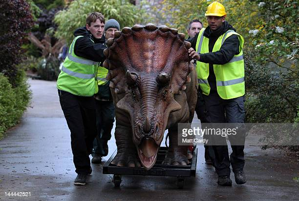 A triceratops dinosaur arrives at Bristol Zoo Gardens on May 14 2012 in Bristol England Twelve animatronic dinosaurs arrived at Bristol Zoo Gardens...