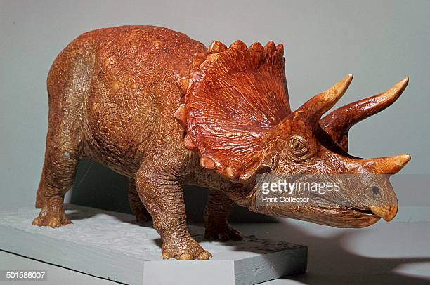 Triceratops model based on finds from the Western USA from the Horniman Museum in London