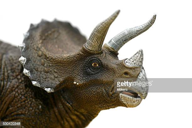 Triceratops plastic model portrait looking at camera