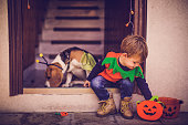 Little boy dressed as a scary pumpkin going for trick or treats on the Halloween alongside with his beagle dog dressed as a bee