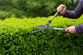 Trimming hedge row