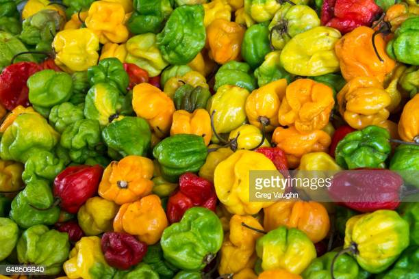 Trinidad Scorpion chili peppers