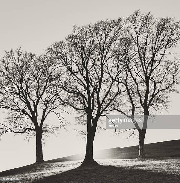 3 つの木