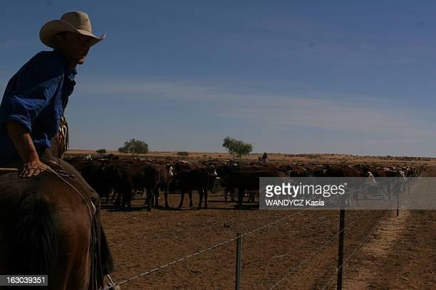 Stockmen La vie quotidienne des stockmen ou jackaroos aux alentours de Birdsville dans les Territoires du Nord en AUSTRALIE un stockman menant son...