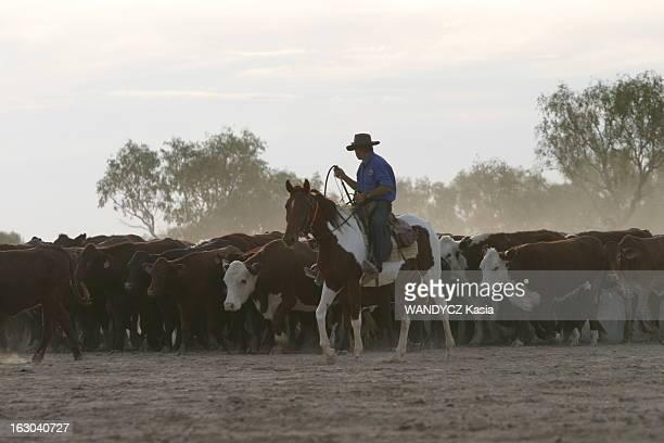 Stockmen La vie quotidienne des stockmen ou jackaroos aux alentours de Birdsville dans les Territoires du Nord en AUSTRALIE un stockman à cheval...