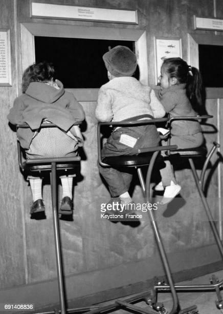Trois enfants assis sur des chaises hautes observent à travers une vitre les poissons du nouvel aquarium le 14 avril 1960 à Dusseldorf Allemagne