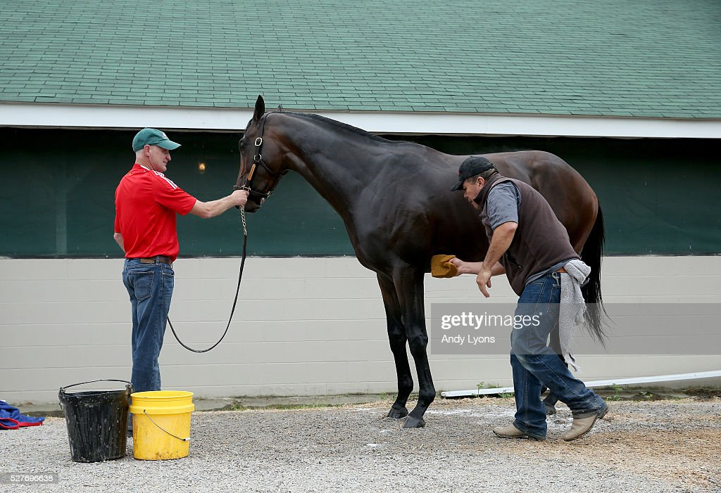 Trojan Nation is washed in the barn area during the morning training for the 2016 Kentucky Derby at Churchill Downs on May 03, 2016 in Louisville, Kentucky.