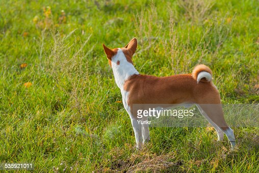 Troop leader looking into the distance : Stock Photo