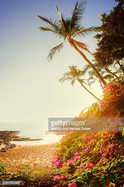 Tropic beach sunrise