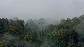 Tropical Amazon forest landscape