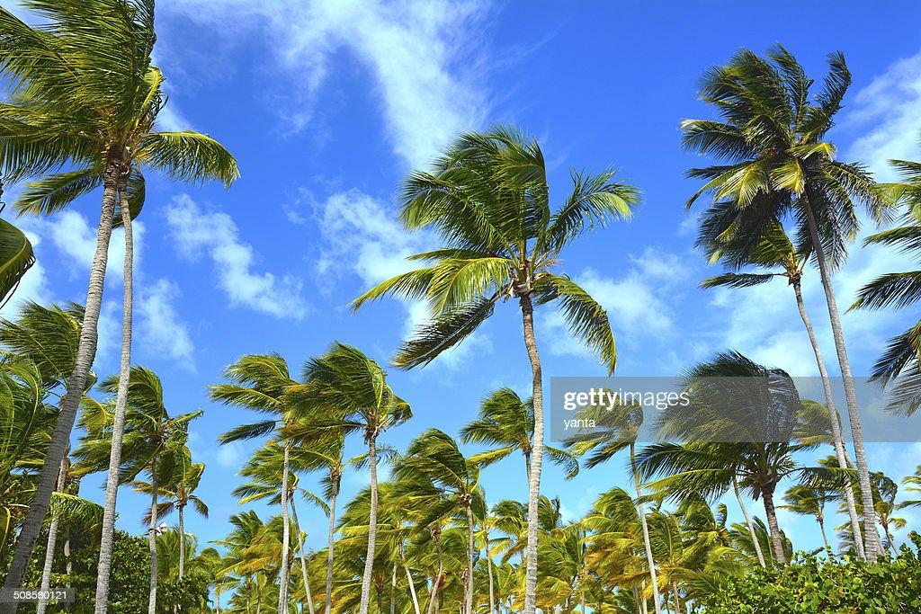 Tropische Hintergrund : Stock-Foto