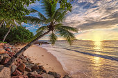 Palm trees on tropical beach in paradise island at sunset, Jamaica, Caribbean sea. Summer vacation and holiday travel concept.