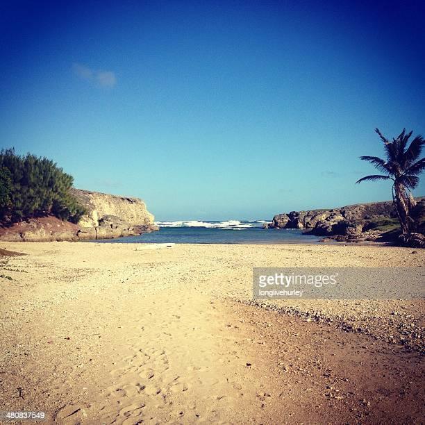 Tropical beach, Flatfield, Barbados