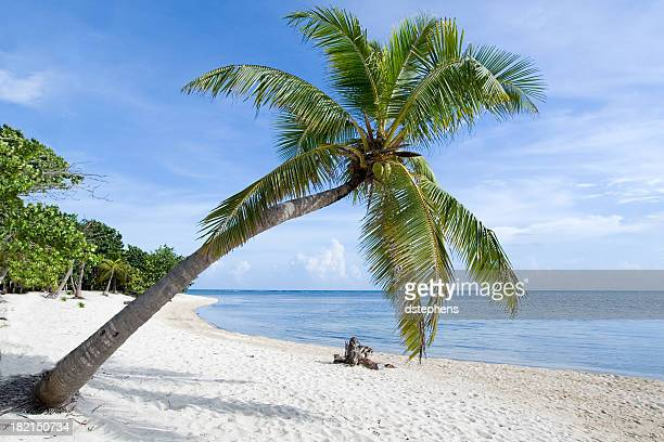 Tropical Beach Palm