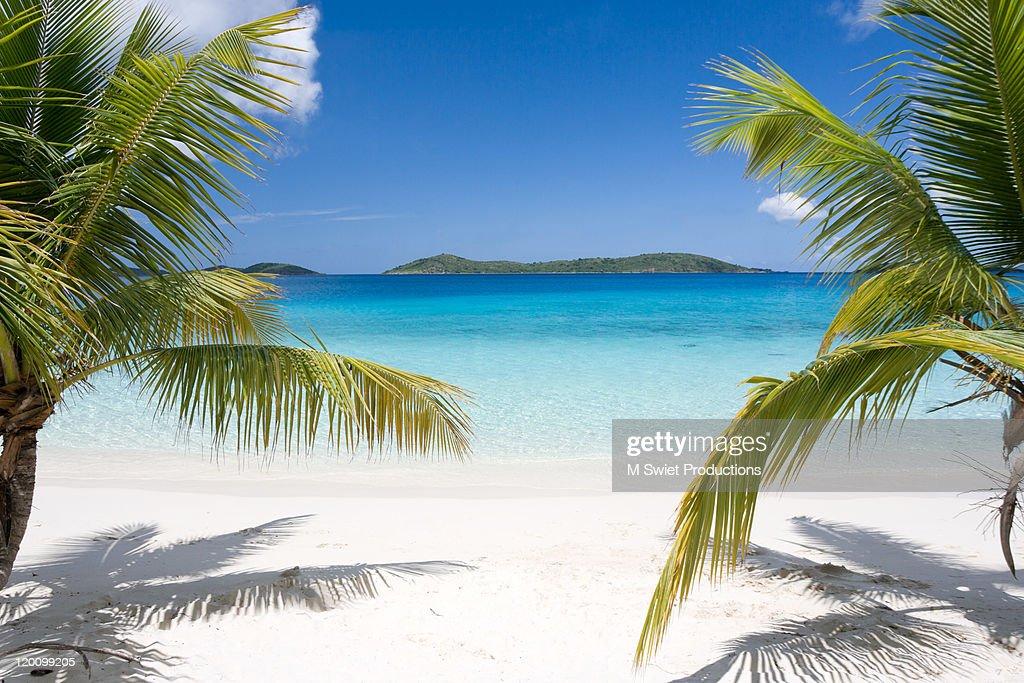 Tropical beach palms