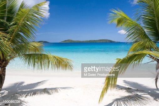 Tropical beach palms : ストックフォト