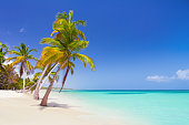 Tropical beach as a wild nature scenery in Punta Cana, Dominican Republic