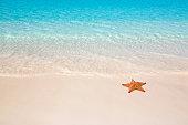 Tropical beach with starfish on sand.