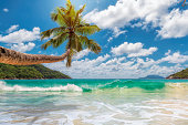 Palm tree on tropical beach in front of lagoon. Fashion travel and tropical beach concept.
