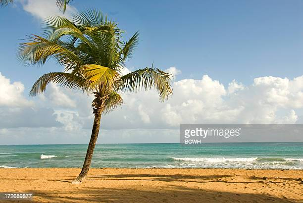 Tropical Beach Scene with Palm Tree