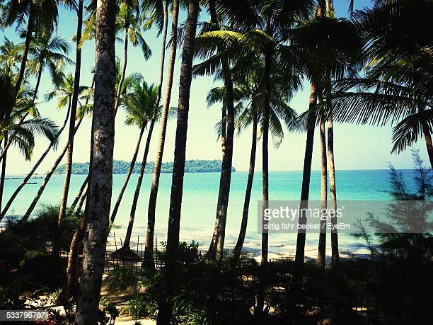 Tropical Beach Seen Through Palm Trees