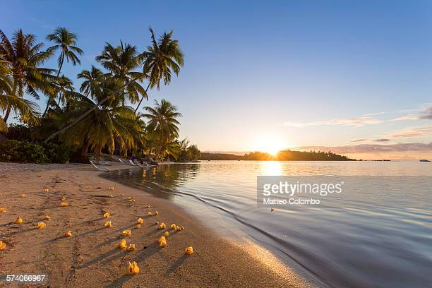 Tropical beach with flowers at sunset, Moorea