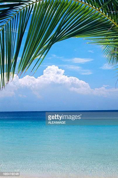 Playa Tropical con palmeras hoja