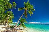 Tropical beach with coconut palm trees on Fiji Islands