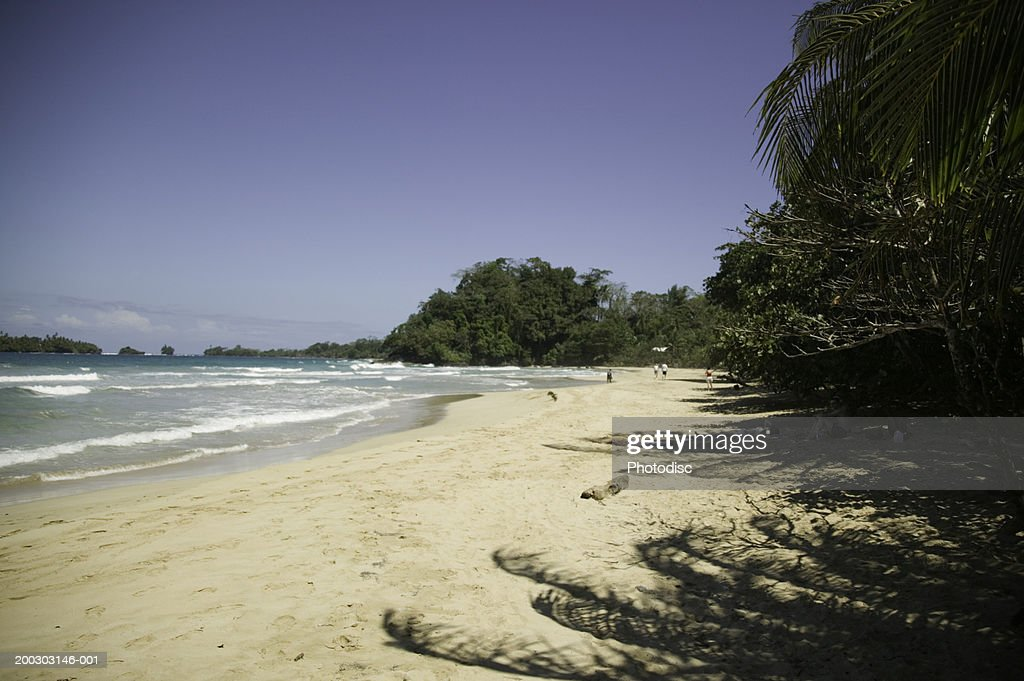 Tropical beach with palm trees : Stock Photo