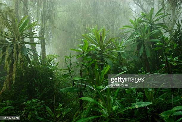 Tropical cloud forest in Central Africa