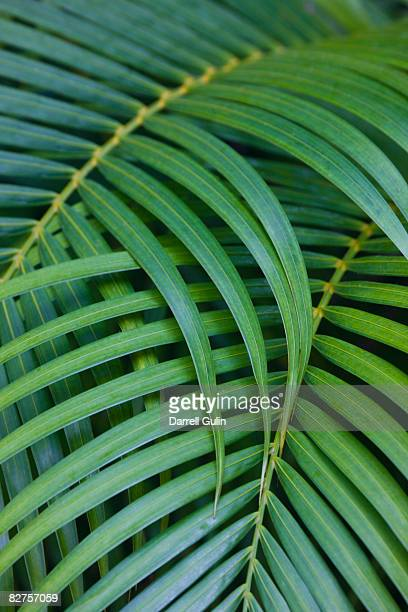 Tropical Coconut Palm Leaves