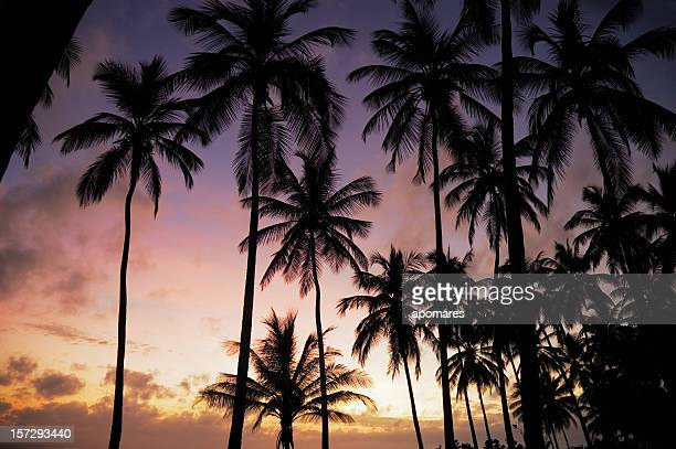 Arbres à la noix de coco tropicale au lever du soleil