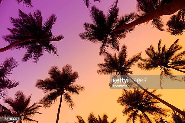 Tropische Kokospalmen bei Sonnenuntergang