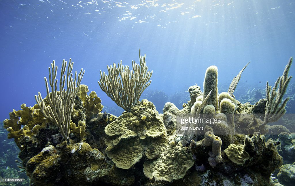 Tropical coral reef scene with fish.