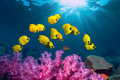 Tropical coral reef scenery