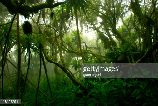 'tropical dense cloud forest coverd in fog, Central Africa'
