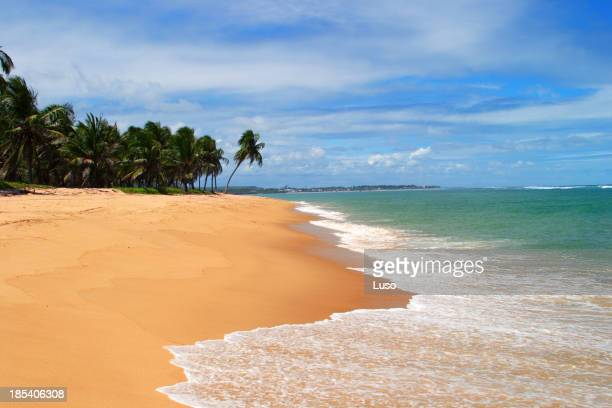 Tropical dream (Brazil)