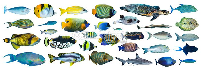 Collection de poissons tropicaux photo thinkstock for Poisson tropicaux