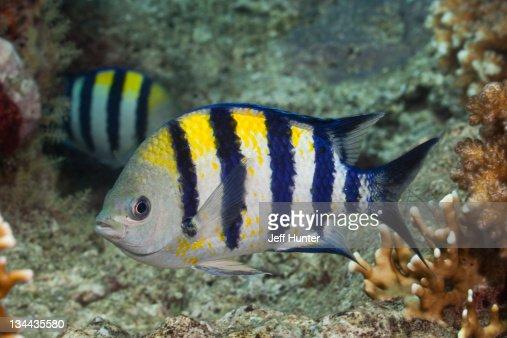 fish tropical poisson - photo #45