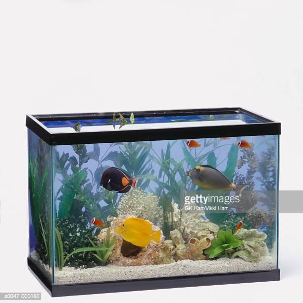 Tropical Fish in Tank