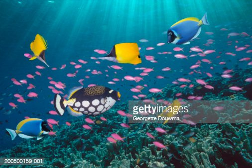Tropical fish over reef, underwater view, (digital composite)