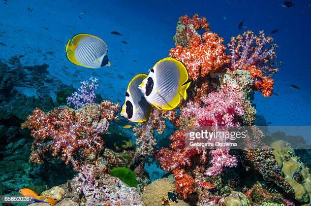 fish tropical poisson - photo #16