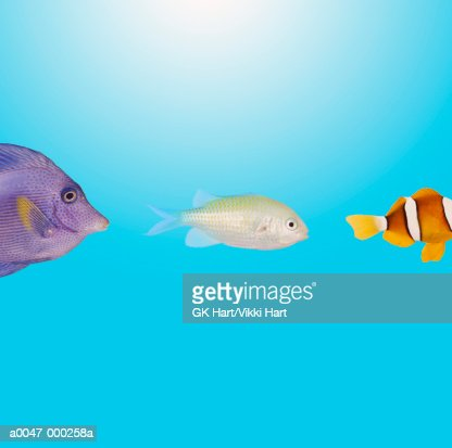 Tropical Fish Swimming in Row : Stock Photo