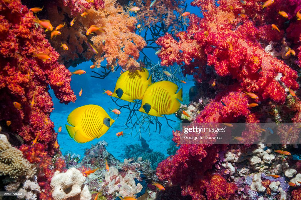 Tropical fish with corals