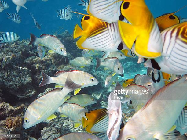 tropical fishes in South Pacific Ocan
